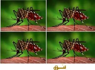Zika iduteye iteyeite?