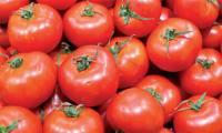 exportations-de-tomates-fraiches