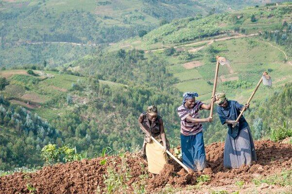 Rwanda:TUBURA mu bahinzi si amashyirahamwe y'abacancuro n'abambuzi?