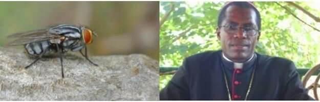 Cameroun:Du décès de Mgr Benoit Balla,les insectesparleront!