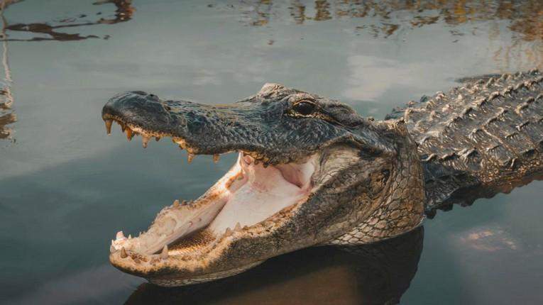 Sauvé par son doigt dans l'œil du crocodile qui l'attaquait!