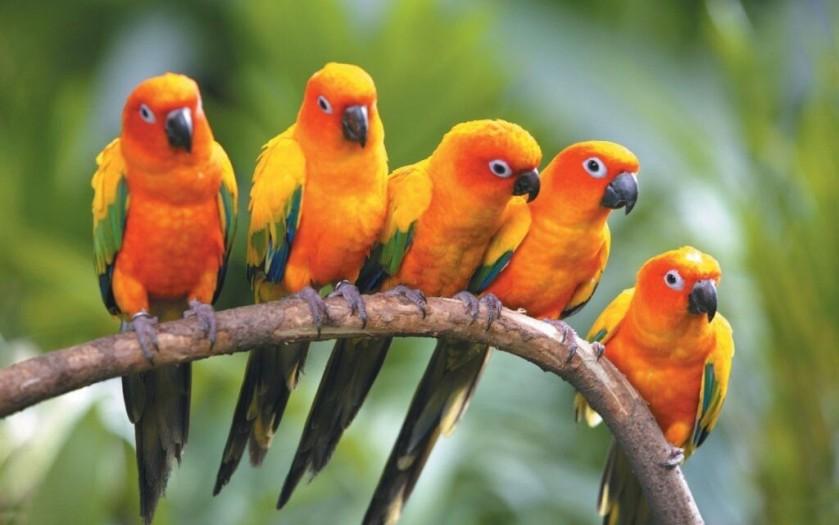 Diversité d'oiseaux