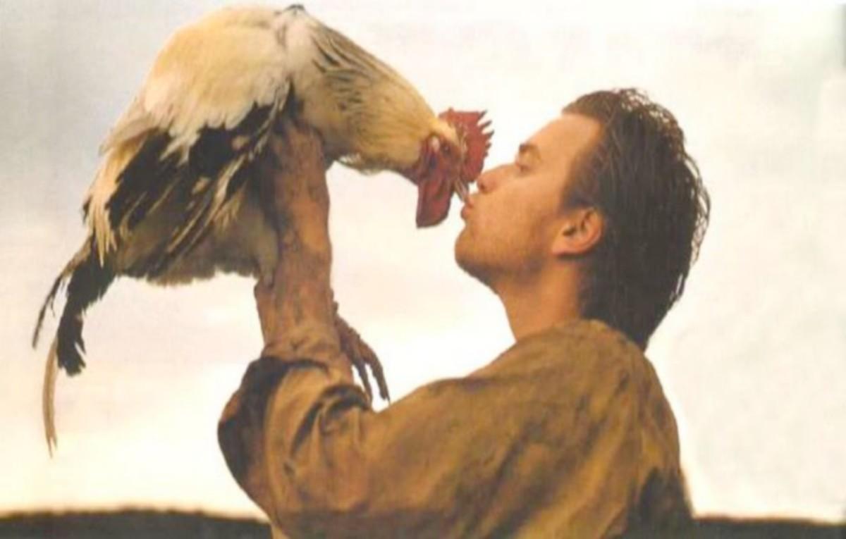 USA: Interdits de donner des bisous aux poulets, ils sont encolère!