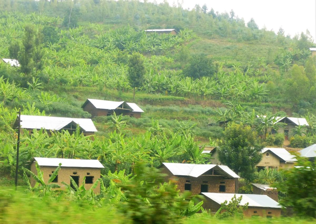 RWANDA: Ces terres fertiles que nous avionsvues…